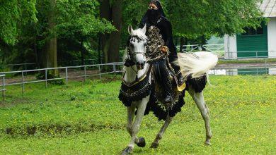 Photo of Ardanowski: stan koni arabskich w Janowie Podlaskim jest dobry