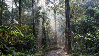 Photo of Nie tylko Amazonia. Lubisz kawę i czekoladę? Dbaj o lasy deszczowe