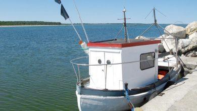Photo of Zakaz połowu dorsza na Bałtyku. Łowimy za dużo ryb! Co możesz zrobić?
