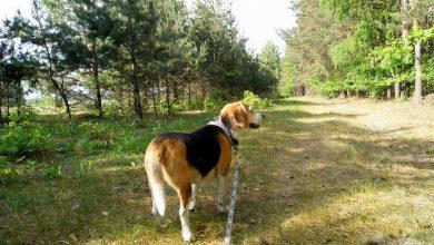 Photo of Pies w lesie i na plaży. O czym trzeba pamiętać?