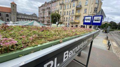 Photo of Poznań. Zielone przystanki oczyszczają powietrze i są przyjazne dla pszczół