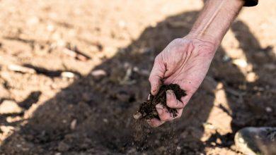 Photo of Betonowanie, niszczenie rzek, wycinanie drzew i koszenie roślinności. Jak walczyć z suszą?