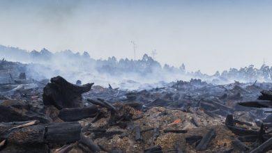 Photo of 3 miliardy zwierząt ucierpiały w pożarze buszu w Australii. Katastrofa w liczbach