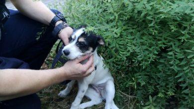 Photo of Mielno i Sopot. Policjanci wybili szybę w aucie, by uratować psy