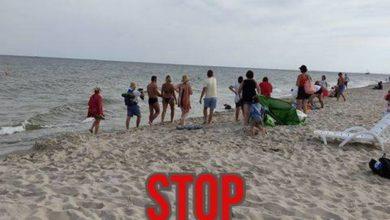 """Photo of Skandal! """"Janusze"""" otoczyły fokę na plaży. Robili zdjęcia wystraszonemu zwierzęciu. Foki to nie zabawki!"""