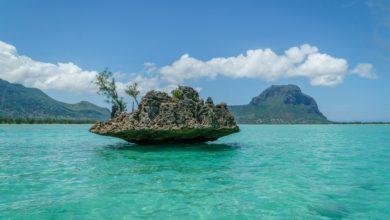 Photo of Mauritius. Śmiertelny wyciek na rajskiej wyspie. Katastrofa ekologiczna – giną delfiny