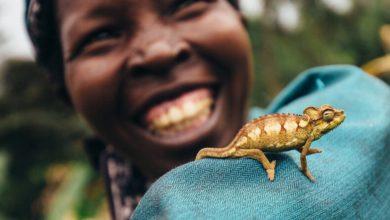 Photo of Raport WWF: Living Planet Report 2020. Drastycznie zmniejszyła się liczebność populacji dzikich zwierząt na Ziemi