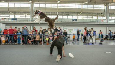 Photo of Poznań. Targi HOBBY, Animal Fest i wystawa Dinozaurów 3D [ZDJĘCIA]