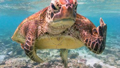 Photo of Wściekły żółw pokazujący… środkowy palec zwycięzcą Najśmieszniejszego Zdjęcia 2020 roku!