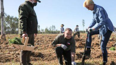 """Photo of Akcja """"sadziMY"""". Para Prezydencka sadziła drzewka na terenie zniszczonym przez """"huragan 100-lecia"""""""