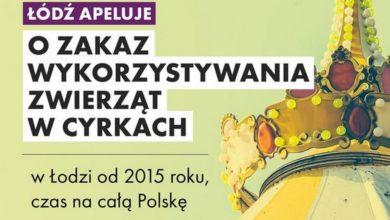 Photo of Łódź apeluje do senatorów RP: cyrk bez zwierząt