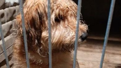 Photo of Łopatą skatował psa i zakopał żywcem. Inny mężczyzna pobił metalowym prętem czworonoga