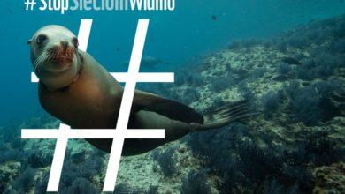 Photo of Sieci widmo zabijają w oceanach. Bezbronne zwierzęta nie mają z nimi szans