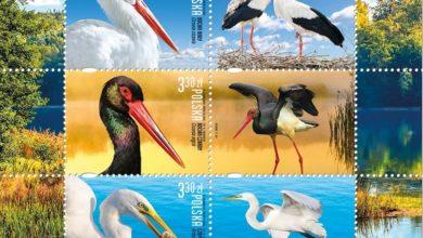 Photo of Bociany i czaple na znaczkach pocztowych. Stwierdzono w Polsce 462 gatunki ptaków