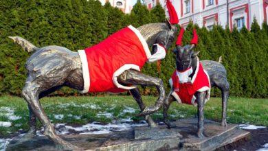 Photo of Poznańskie koziołki już w świątecznych strojach i… maseczkach