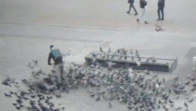 Photo of Skandaliczna scena w Krakowie. Rowerzysta rozjechał gołębie [WIDEO]