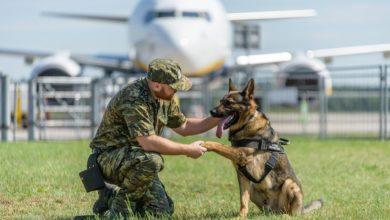 Photo of Projekt ustawy regulującej status zwierząt w służbach mundurowych przyjęty