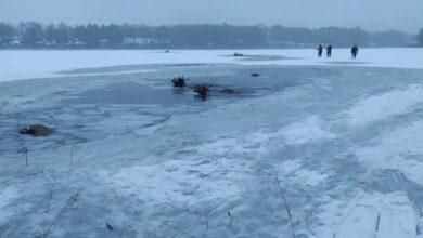 Photo of Dramatyczna akcja ratunkowa. Pod stadem jeleni załamał się lód