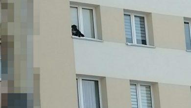 Photo of Mróz. Wystawił psa na parapet w bloku na 9. piętrze i zamknął okno