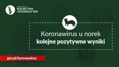 Photo of Koronawirus na fermie norek w Polsce