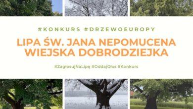 Photo of Ruszyło głosowanie na Europejskie Drzewo Roku 2021. Lipa z Dulczy Wielkiej reprezentantem Polski