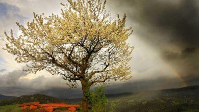 Photo of Drzewo Roku 2021. Zagłosuj na jedno z 16 niezwykłych drzew