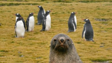Photo of The Comedy Wildlife Photo Awards