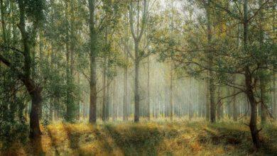 Photo of Światowy Dzień Lasów. Zdrowe drzewa to zdrowi ludzie. Świat traci co roku 10 mln ha