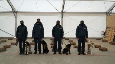 Photo of KAS. W Polsce psy służbowe pomogą w wykrywaniu COVID-19