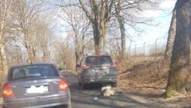 Photo of Były senator PiS zatrzymany. Ciągnął psa na linie za samochodem