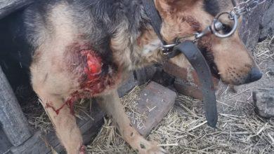 Photo of Sołtyska ciągnęła psa na haku za samochodem. Została zatrzymana