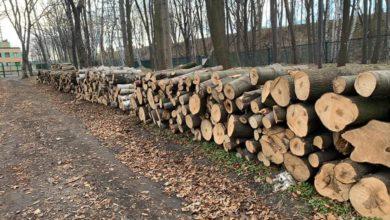 Photo of Muzeum II Wojny Światowej. Na Westerplatte trwa rzeź drzew