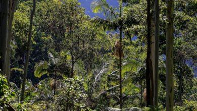 Photo of Unia Europejska, Chiny i Indie największymi niszczycielami lasów deszczowych