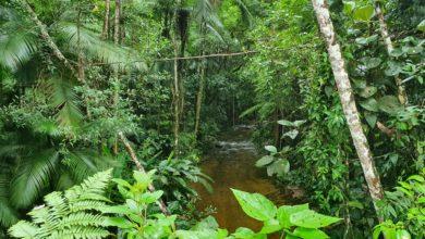 Photo of WWF. W ciągu ostatnich 20 lat na świecie odrodziły się lasy wielkości Francji