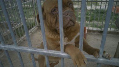 Photo of Pseudohodowla w Starej Hucie. Uratowano 139 psów. 249 było zakopanych [WIDEO]