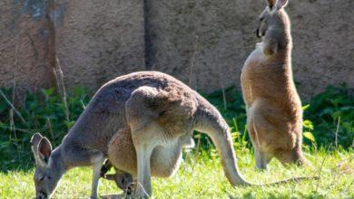 Photo of Narodziny maluchów. Nowi podopieczni w łódzkim Zoo