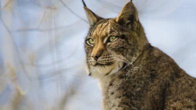 Photo of Bioróżnorodność – apel PE: chrońmy ludzi i dzikie zwierzęta